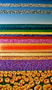 tulip fields (2.5'x3.5')